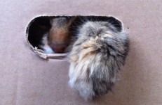 chuffin cat in a box