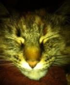 Sleeping close-up