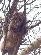 Chuffin cat stuck up a tree