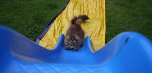Chuffin cat on a slide