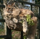 Sunbathing in a hanging basket