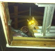 You don't need a torch in the attic when you have a chuffin cat