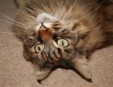 Catnip craziness