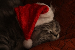 All Christmassed out!