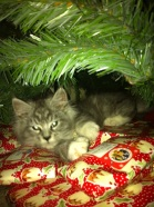 Remove your kitten from the Christmas tree...