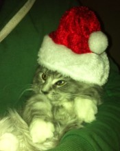 Gloria in her Christmas hat